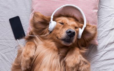 Welke muziek helpt met slapen?